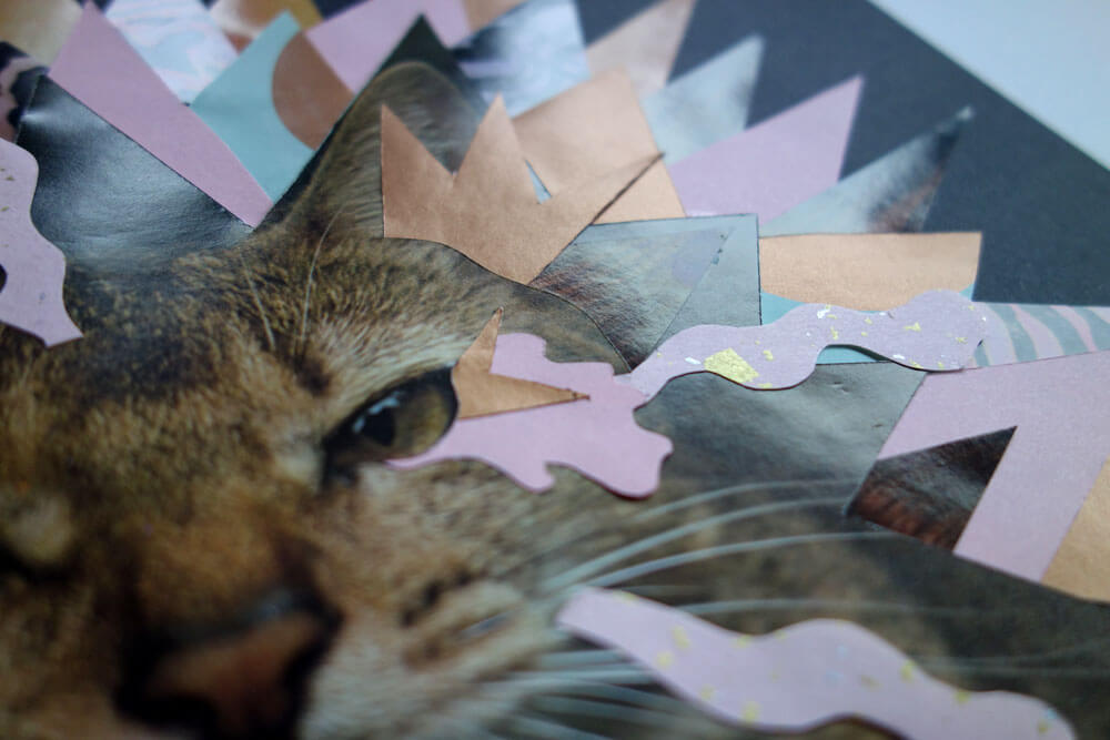Sylvia_stolan_brown_cat_closeup2