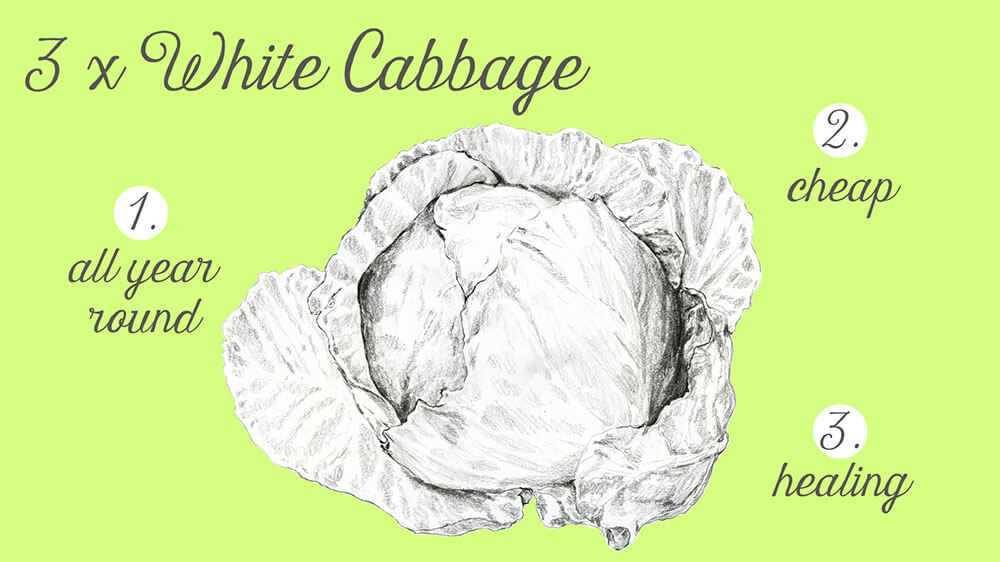 drawing white cabbage